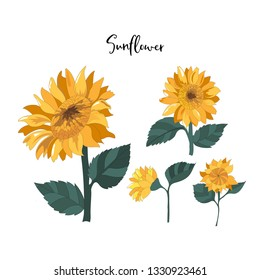 hand drawn sunflowers element on white in vector illustration