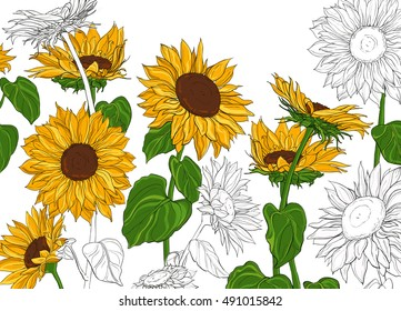 Hand drawn sunflowers and leaves isolated on white background vintage sketch vector