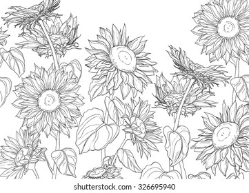 Hand drawn sunflowers and leaves vector isolated on white background vintage sketch line