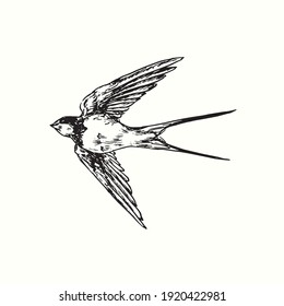 Hand drawn swallow bird flying. Ink black and white drawing. Vector illustration