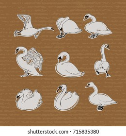 Hand drawn swans set. Swan stickers isolated on craft paper background.