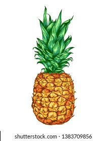 Hand drawn sweet ripe vector pineapple on a white background.
