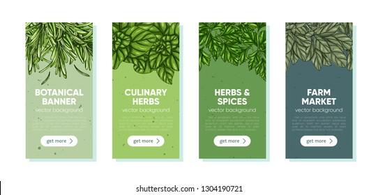 Hand drawn templates with culinary herbs and spices. Vector illustration for advertisement, recipes, label, farm market products. Hand drawn vintage background. Botanical web template.