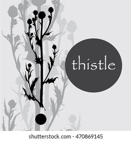 hand drawn thistle