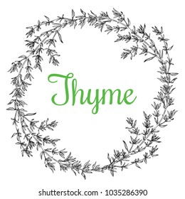 Hand drawn thyme  plant wreath with leaves isolated on white background. Vintage  spicy herbs sketch.  Doodle cooking ingredient, seasoning.  Herbal engraved style vector illustration. Italian cuisine