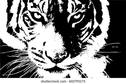 Hand drawn Tiger. Natural colors. Illustration.