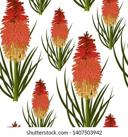 hand drawn torch lilly or red hot poker,australia native plant in seamless pattern on white background