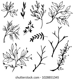 Hand drawn tree branches with leaves and buds. Graphic botanical illustration. Vector image.