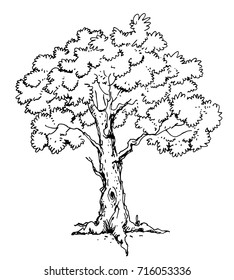 hand drawn tree isolated on white background. pen sketch, vector illustration.