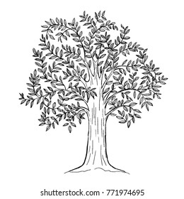 hand drawn tree with leaves, natural plant sign, vector illustration