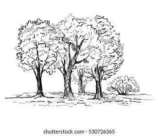 Hand drawn trees in the park. Vector illustration.