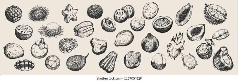 Сollection of hand drawn tropical fruits  from Thailand on white background.For restaurant menus.