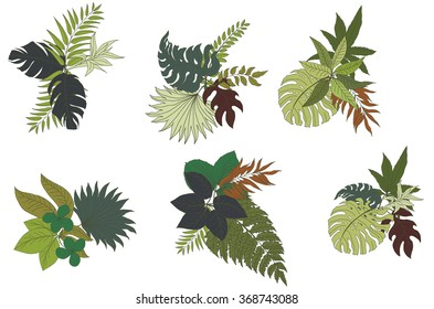 hand drawn Tropical Leaves Collection ,isolate vector