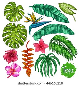 Hand Drawn Tropical Leaves And Flowers Color Set. Botanical Collection In Sketch Style