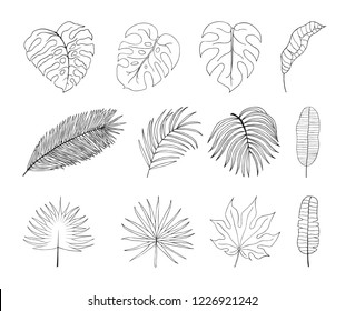 Hand drawn tropical leaves silhouettes. Aralia, monstera, banana, coconut leaf botanical icons. Vector isolated illustration.