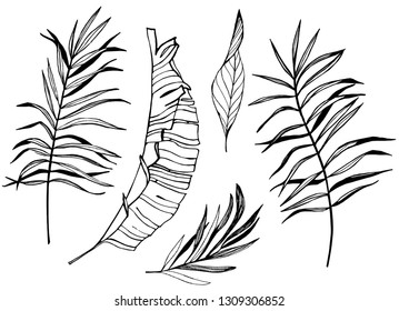 Hand drawn tropical plants illustration. Set of palm leaves silhouettes isolated on white background. Pen botanical drawing.