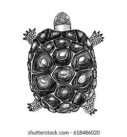 Hand Drawn Turtle On White Background
