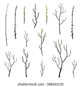 Hand drawn twigs with buds, growing leaves, tree branches and pussy willow isolated on white background.