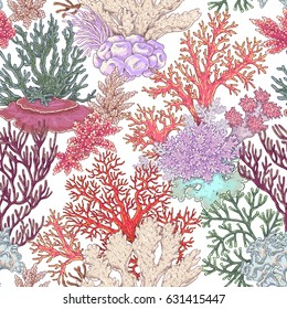 Hand drawn underwater natural elements. Coral reef seamless pattern. Vivid corals on white background. Undersea bottom texture.