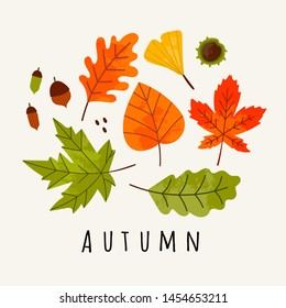 Hand drawn various autumn leaves, acorn and chestnut. Colored vector trendy illustration. Flat design. Stamp texture. All elements are isolated