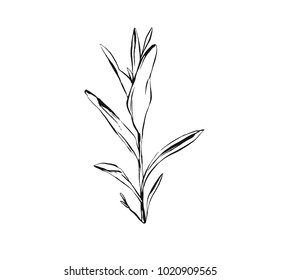 Hand drawn vector abstract artistic ink textured graphic sketch drawing illustration of rustic spring suculent flower branch plant isolated on white background.