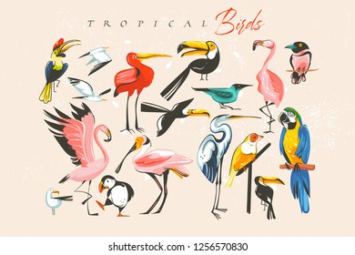 Hand drawn vector abstract cartoon summer time fun big bundle group collection illustrations set with tropical exotic zoo or wildlife birds isolated on white background