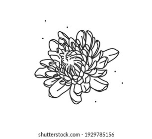 Hand drawn vector abstract stock flat graphic illustration with logo element of line flower art of chrysanthemum in simple style for branding,isolated on white background