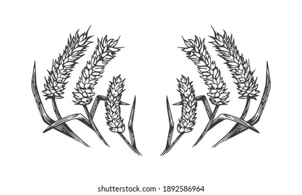 Hand drawn vector art of cereals ears wreath isolated on white background.