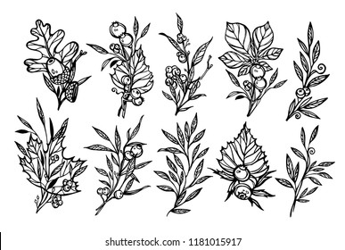 Hand drawn vector autumn elements ( laurel, leaf, leaves,flowers,acorns, berries,maple,oak,branches, berry). Autumn objects. Perfect for invitations, greeting cards, posters, printsand etc.