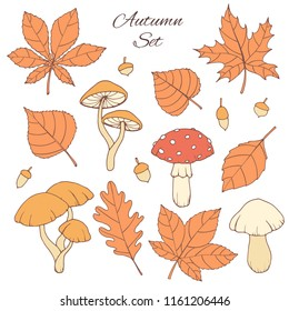 Hand drawn vector autumn set with oak, poplar, beech, maple, aspen and horse chestnut leaves, acorns and mushrooms isolated on the white background. Fall elements for you design.