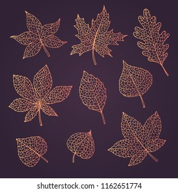 Hand drawn vector autumn set with oak, poplar, beech, maple, aspen and horse chestnut leaves and physalis of orange colors isolated on dark background. Detailed foliage line art. Fall collection.
