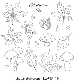 Hand drawn vector autumn set with oak, poplar, beech, maple, aspen and horse chestnut leaves, mushrooms, acorns and physalis outline isolated on the white background. Fall collection for you design.