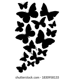 Hand drawn vector of black butterflies silhouettes on white background. Stock illustration of insects.