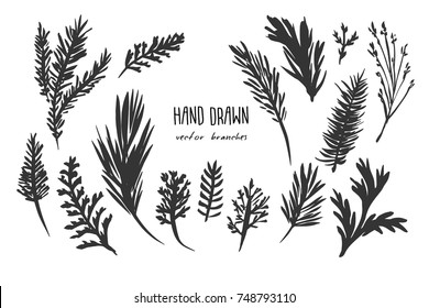 Hand Drawn Vector Branches Set .