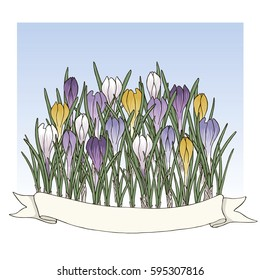 Hand drawn vector colorful crocus flowers with a ribbon. All objects are isolated.