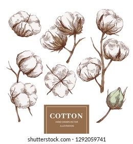 Hand drawn vector cotton branches collection. Natural botanical eco illustration