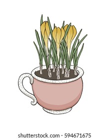Hand drawn vector cup full of crocus flowers isolated on white background