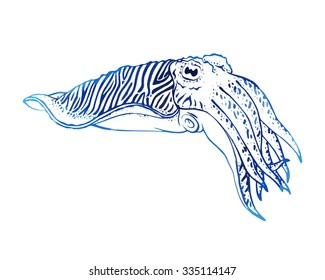 Hand drawn vector cuttlefish