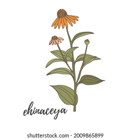Hand drawn vector drawing in black outline. A bouquet of wild steppe pampas grass, herbal plants. A bunch of dried flowers, twigs of a panicle for boho decor, decoration.