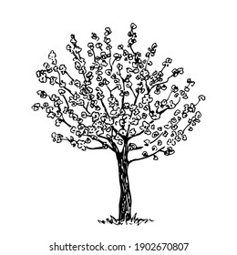 Hand drawn vector drawing in engraving style. Blooming fruit tree isolated on white background. Spring time, sakura, orchard. Simple sketch in ink, black outline.