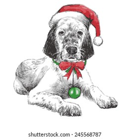 hand drawn vector of English setter with christmas hat on white background