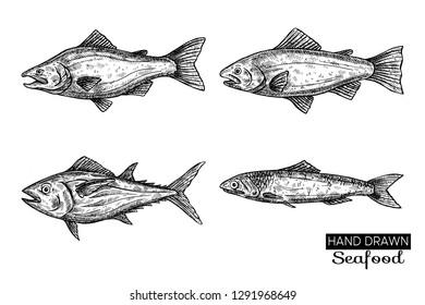 Hand drawn vector fish.