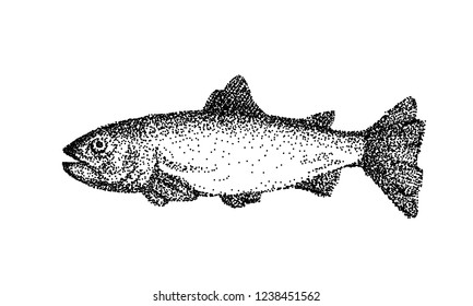 Hand drawn vector fish. Ink sketch of trout.  Retro style - engraving.