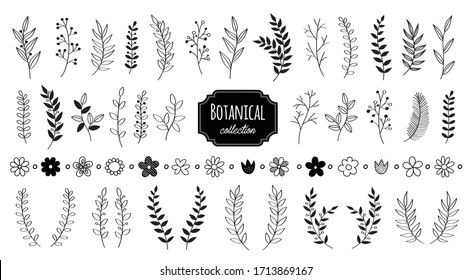 Hand drawn vector floral elements. Branches and leaves. Herbs and plants collection. Vintage botanical illustrations.