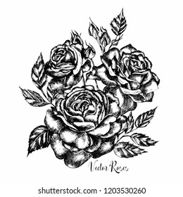 Hand drawn vector flower rose bouquet. Illustration