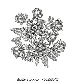 Hand drawn vector flowers. Vintage floral composition, spring magnolia flowers and leaves isolated on white background. Illustration engraved