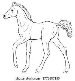 Hand drawn vector of foal isolated on white background. Black and white stock illustration of young horse for coloring book.