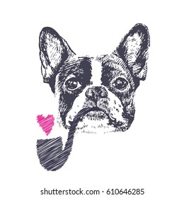 Hand drawn vector of French Bulldog