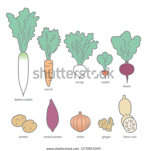 Hand Drawn Vector Graphic Illustrations Vegetables Stock Vector Royalty Free 1570851043