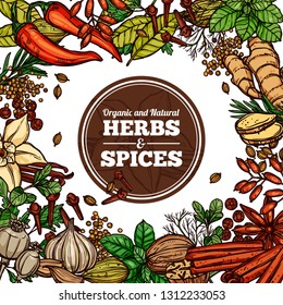 Hand drawn vector herbs and spices with circle label. Background frame with sketch color illustration of ginger, rosemary, mint, vanilla, cinnamon, chili pepper. Design template for healthy food